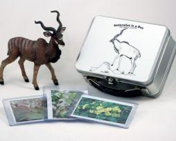 NIB_Antelope
