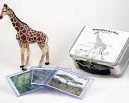 NIB_Giraffe