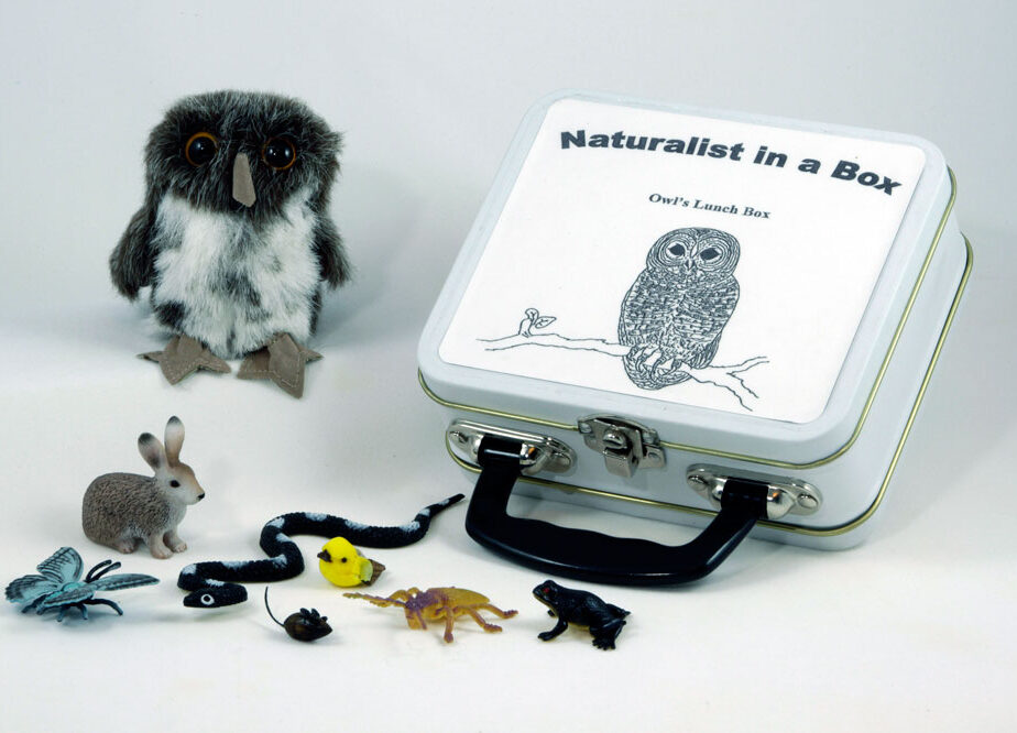 Spotted Owl Naturalist in a Box | Blue Stem