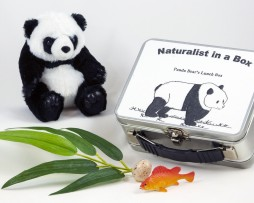 NIB_Panda