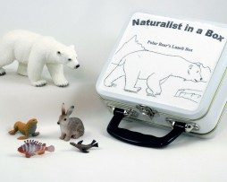 NIB_Polar_Bear